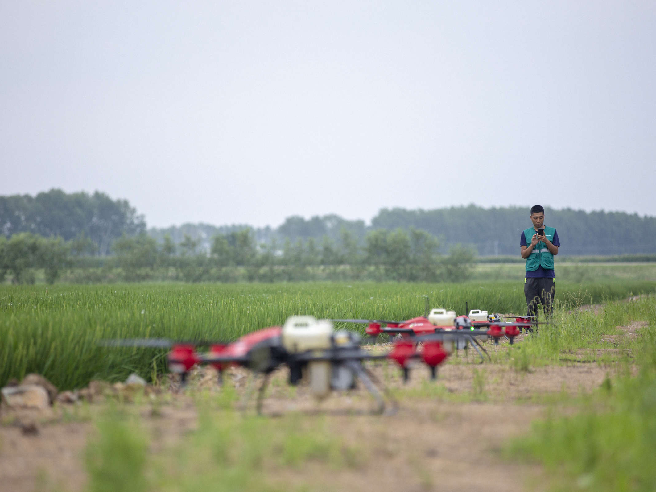 A plant protector is manipulating his XAG drone. PHOTO: Credit to XAG